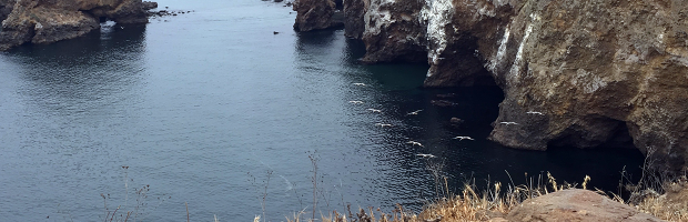Overlooking sea caves on Santa Cruz island