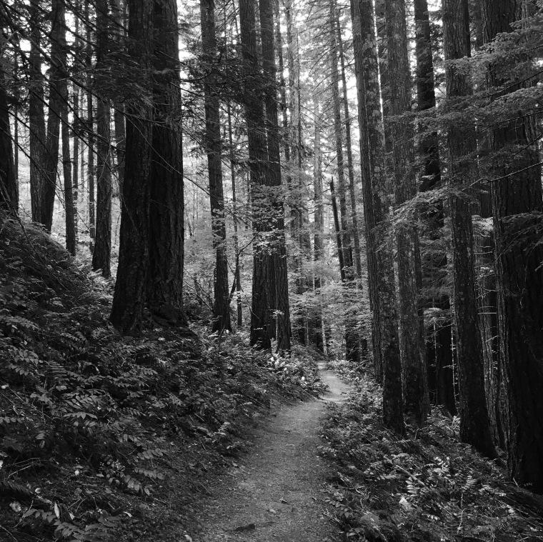 Trail in a cedar and fir forest