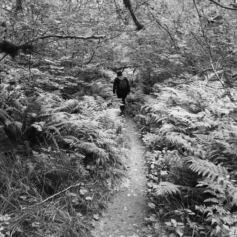 Trail cutting though a glade of ferns