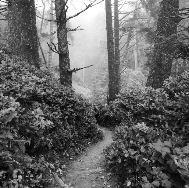 The fern-lined Second Beach trail cut down through a dense fog