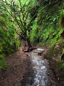 Down into Finnich's Glen