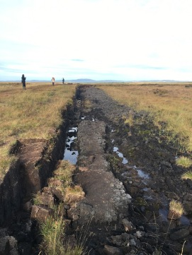 The Peat Bog